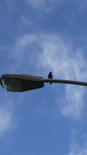 Sky Birdの写真素材 [FYI02983629]