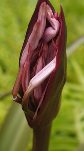 Flowerの写真素材 [FYI02983707]