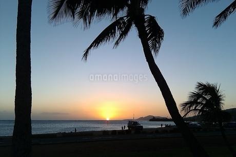 Sunset Palm treeの写真素材 [FYI02983716]
