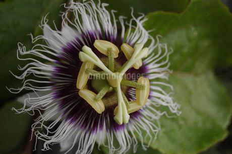 奇妙な形をした花の写真素材 [FYI02983753]