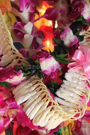 Hawaiian Leiの写真素材 [FYI02983840]