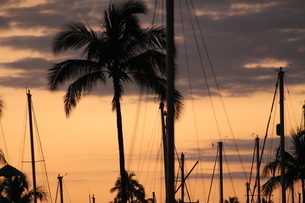 Sunset in Marinaの写真素材 [FYI02983862]