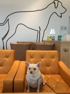 Dog Cafeの写真素材 [FYI02983878]