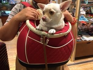 Dog bagの写真素材 [FYI02983890]