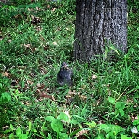 野鳥が何かくわえています。の写真素材 [FYI02983926]