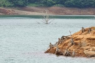 湖に現れた枯れ木の写真素材 [FYI02984071]