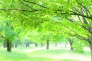 優しい光に包まれたみどりの林(ソフトフォーカス)の写真素材 [FYI02984125]