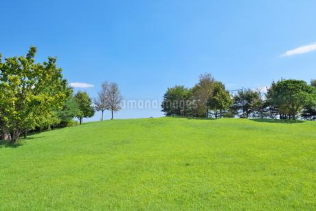 青空の下の緑の木々と丘の写真素材 [FYI02984135]