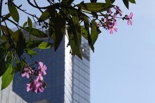 サンパウロの都会に咲く花の写真素材 [FYI02984158]