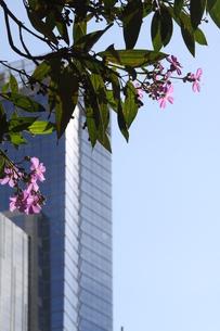 サンパウロの都会に咲く花の写真素材 [FYI02984159]