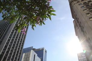 サンパウロの都会に咲く花の写真素材 [FYI02984160]