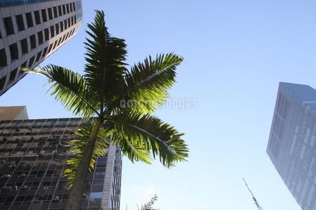 都会に茂るヤシの木の写真素材 [FYI02984162]