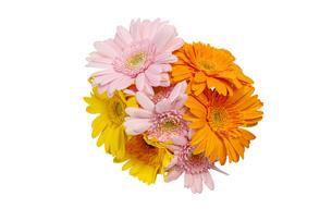 ガーベラの花束の写真素材 [FYI02984210]