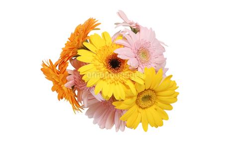 ガーベラの花束の写真素材 [FYI02984212]