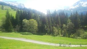 スイス ユングフラウ地方 ヴェンゲンアルプ~ウェンゲン 8  ハイキングコースの写真素材 [FYI02984214]