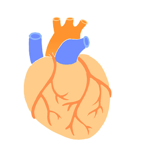 心臓 のイラスト素材 [FYI02984440]