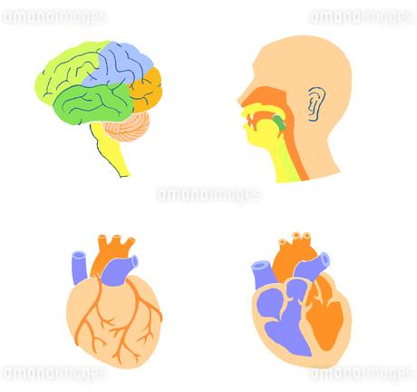 脳 心臓 口腔のイラスト素材 [FYI02984443]