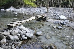 西丹沢 西沢に架かる木橋の写真素材 [FYI02984472]
