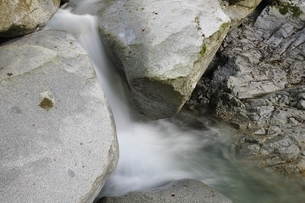 西丹沢 西沢の渓流の写真素材 [FYI02984481]