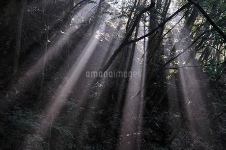 森の木洩れ日の写真素材 [FYI02984483]