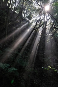 森の木洩れ日の写真素材 [FYI02984484]