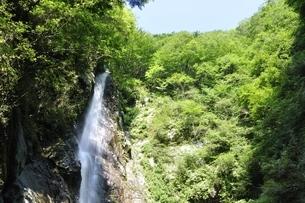 西丹沢 本棚の滝の写真素材 [FYI02984496]