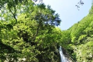 西丹沢 本棚の滝の写真素材 [FYI02984499]