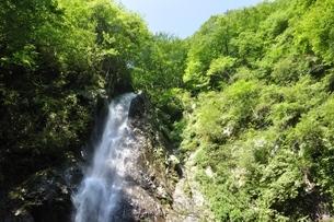 西丹沢 本棚の滝の写真素材 [FYI02984503]