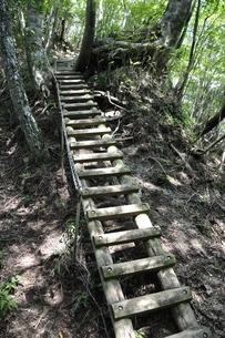 梯子の登山道の写真素材 [FYI02984508]