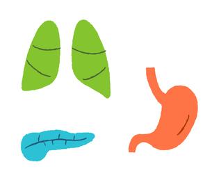 内臓 肺 膵臓 胃のイラスト素材 [FYI02984519]