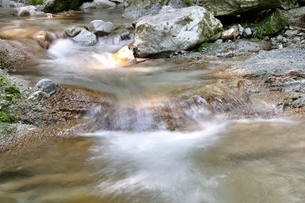 西丹沢 本棚沢の渓流の写真素材 [FYI02984520]