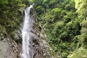 西丹沢 本棚の滝の写真素材 [FYI02984532]