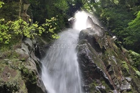 西丹沢 本棚の滝の写真素材 [FYI02984533]