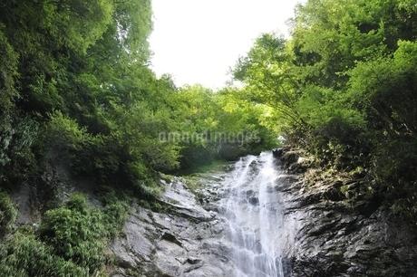 西丹沢 下棚の滝の写真素材 [FYI02984542]