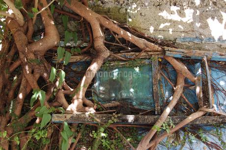 木の根が成長して窓枠を壊しているの写真素材 [FYI02984551]
