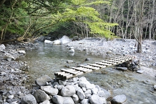 西丹沢 西沢に架かる木橋の写真素材 [FYI02984552]