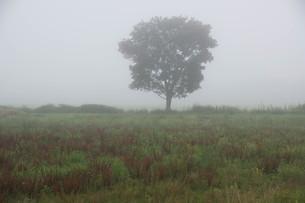 朝霧の高原の写真素材 [FYI02984568]