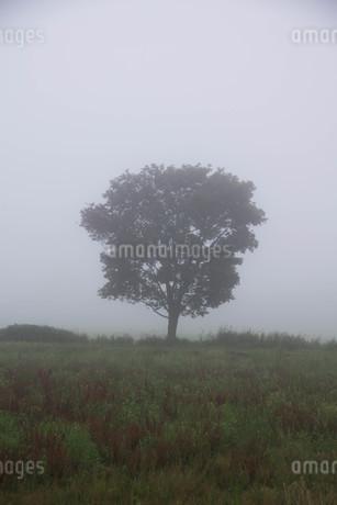 朝霧の草原の写真素材 [FYI02984569]