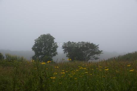 朝靄の高原の写真素材 [FYI02984570]
