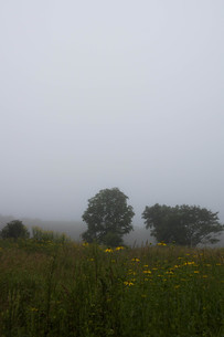 朝霧の高原の写真素材 [FYI02984571]