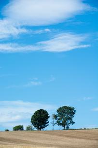 畑の丘に立つ三本の木 美瑛町の写真素材 [FYI02984580]