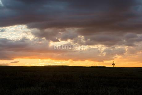 美しい夕焼け空と丘の上の松の木 美瑛町の写真素材 [FYI02984588]