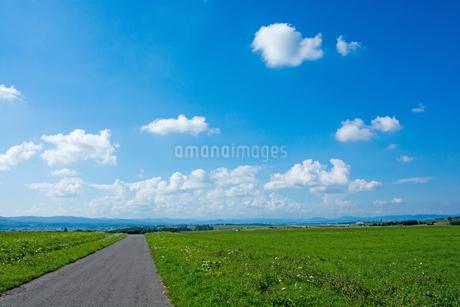 緑の野菜畑と農村の道の写真素材 [FYI02984592]