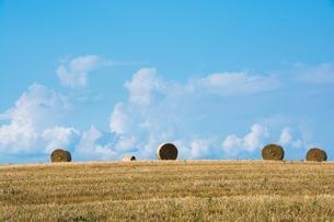 刈り取りが終わった麦畑とムギロール 美瑛町の写真素材 [FYI02984594]