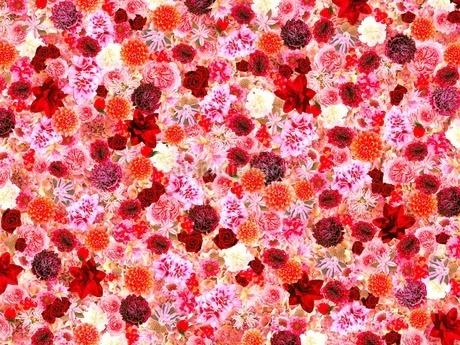花の写真素材 [FYI02984604]