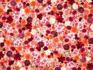 花の写真素材 [FYI02984605]