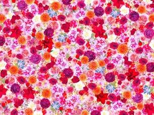 花の写真素材 [FYI02984606]