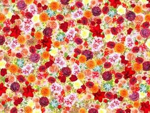 花の写真素材 [FYI02984607]