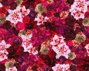 花の写真素材 [FYI02984609]