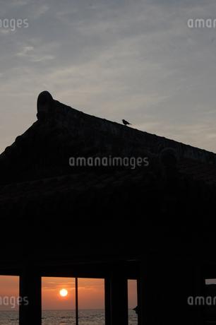 シルエットのアジアの建物と鳥の写真素材 [FYI02984761]